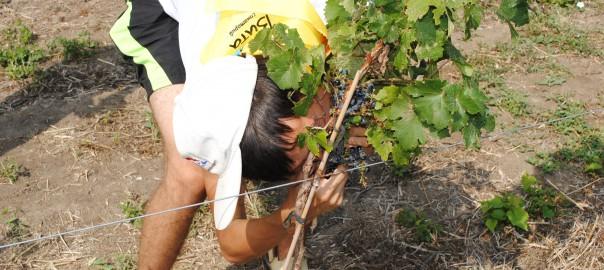 Экскурсия в винной деревне