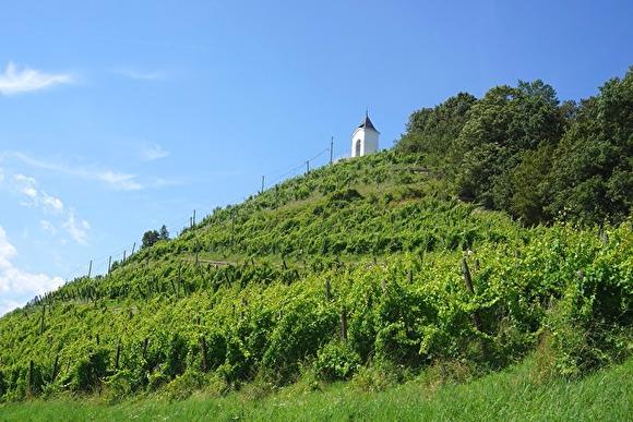 Кретов заложил капсулу в основание центра винного туризма в Анапе
