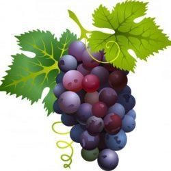 Итоги виноградовинодельческой отрасли Ставропольского края за 2017 год